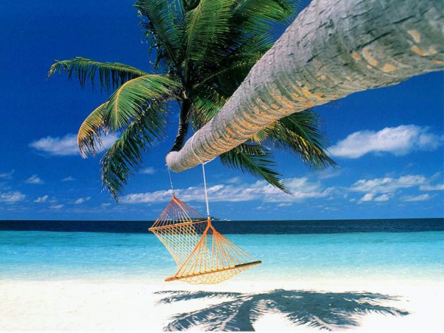 hammock hanging from a palm tree on a tropical beach